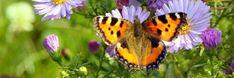 Afbeelding: nachtvlinder          Wat is het verschil tussen dagvlinders en nachtvlinders?   Het verschil tussen dag- en nachtvlinders ligt niet alleen aan het tijdstip van vliegen.