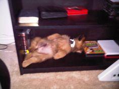 Sarge, catching a nap
