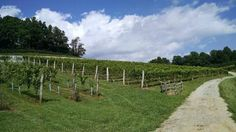 Linville falls winery, nc