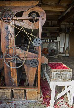 Stephanie Foster - Antique Machinery