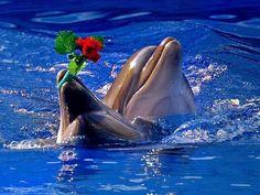 Golfinhos fofos
