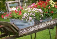 Zinkwanne Bepflanzen Und Als Pflanzkübel Oder Miniteich Gestalten