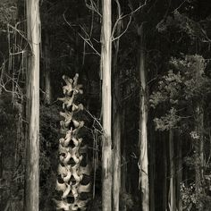 Black_wallaby_forest by Karena Goldfinch