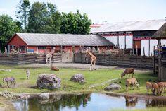 Ingrid Holm Blog - dyreparken i Kristiansand