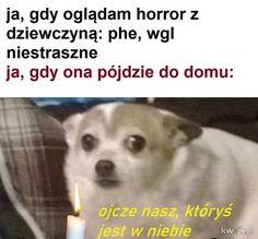 Polish Memes, Funny Mems, Fresh Memes, Haha, Horror, Instagram, Discord, Beautiful, Pug