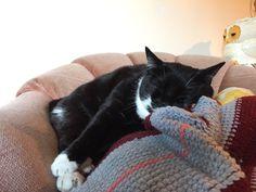 Cute! Gertie sleeps it off