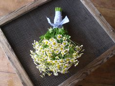 A bouquet of tiny chamomile daisies