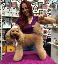 Trabajo en Seminario impartido por el maestro estilista canino Di Sousa Poodle Grooming, Friend Zone, Animals, Style, Security Fencing, Veterinary Technician, Nail Hacks, Ozone Therapy, Dog Hotel