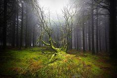 Bois des Monts d'Arrées ~ Bretagne (© Fabrice Le Borgne)