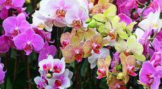 Legyen csodálatosan szép orchideád ősszel és télen is!