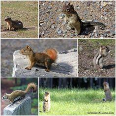A wildlife do Canadá