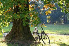 Denmark in autumn | Autumn in the park 1 Frederiksberg Have, Copenhagen, Denmark