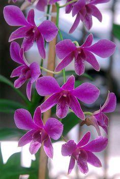 Flower set - Purple Orchid | Flickr - Photo Sharing!