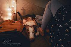 campingdogs by 4leggedmountain #travel #traveling #vacation #visiting #trip #holiday #tourism #tourist #photooftheday #amazing #picoftheday
