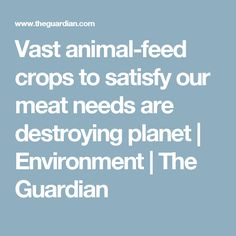 Vast animal-feed crops to satisfy our meat needs are destroying planet | Environment | The Guardian