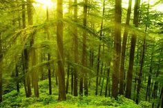 15 Places in India to Chill Out this Summer, Summer, Vacations, Coorg, Karnataka,  Islands of Lakshadweep, Majuli Island, Assam, Andamans, Deodar Forest, Himachal Pradesh, Kashmir, Ladakh, Leh, Matheran, Mizoram, Himalaya, Nanda Devi, Nohkalikai Falls, Cherrapunji, Valley of Flowers, Uttarakhand, Stok Range, Ladakh, Hill station, Tourism, Munnar, Tea garden, Yumthang Valley, Sikkim, Deodar Forest, Himachal Pradesh