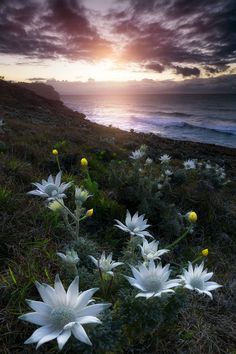"tulipnight: ""b e t w e e n II w o r l d s by Aaron Pryor """