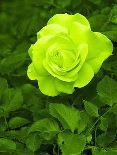 bunga http://www.aakflorist.com/
