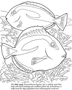Dover Publications sample page from Under the Sea Adventure