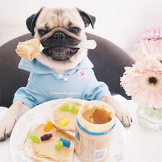 This Junk-Food-Loving Pug is All of Us
