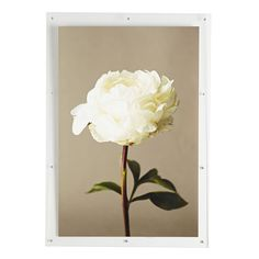 White Peony Wall Art--also love the frame!