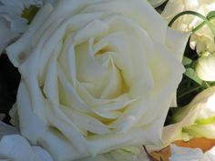 White rose heart (3072x2304, rose, heart)  via www.allwallpaper.in
