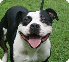 Newport, NC - American Pit Bull Terrier Mix. Meet Buster, a dog for adoption. http://www.adoptapet.com/pet/11584448-newport-north-carolina-american-pit-bull-terrier-mix