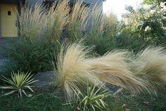 Lilyvilla Gardens - Beyond Garden Design