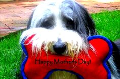 "Happy Mother's Day!  ""....now can we please go for a walk? """