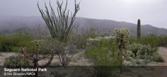 Saguaro National Park | National Parks Conservation Association