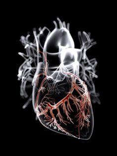 Preciosa imagen del corazón y las arterias coronarias hecha con Autodesk 3ds Max por James Archer