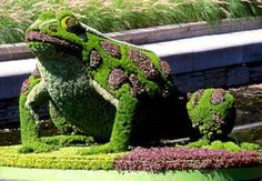 Beautiful frog made of grass located in a public garden. The details of this sculpture are surely amazing. As we can spot frogs in garden occasionally, make sure to be prepared and not get scared by this giant frog. Amazing Gardens, Beautiful Gardens, Parks, Amazing Grass, Topiary Garden, Frog Art, Plant Art, Weird Pictures, Green Art