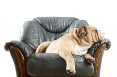 Tier von Möbel fernhalten
