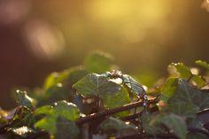 Bracelet apatite, améthyste, pierre de lune . Parangon de Kelsingra . : Bracelet par grenouilleries