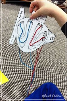 Great hands-on ideas for learning about the heart and the human body science experience Middle School Science, Elementary Science, Science Classroom, Science Education, Teaching Science, Science For Kids, Science Activities, Health Education, Physical Education