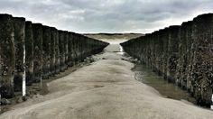 Beach dutch