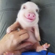 baby animals that can save your dull day - Tiere Bilder - Animals Wild Cute Baby Pigs, Cute Piglets, Baby Animals Super Cute, Cute Little Animals, Cute Funny Animals, Baby Piglets, Baby Animals Pictures, Cute Animal Pictures, Animals And Pets