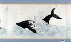 座頭鯨 拡大