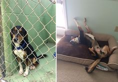 These Before And After Adoption Pictures Of Dogs Will Make Your Eyes Rain From Joy