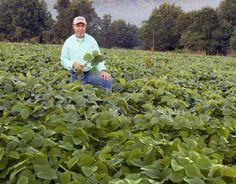 Best Food Plot Crops