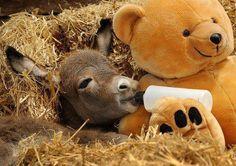 baby animals ✿⊱╮