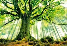 Ponthus Beech tree in Brocéliande Forest. Bretagne, France - 39 Awesome Nature Photos Of Incredible Places World's Most Beautiful, Beautiful World, Beautiful Places, Beautiful Forest, Amazing Places, Beautiful Pictures, Epic Pictures, Forest Pictures, Epic Photos