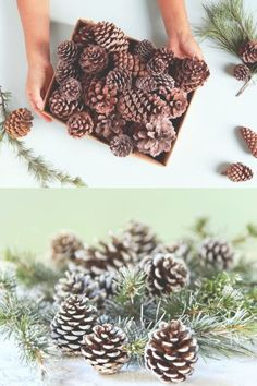 Dried Scented Pine Cones Natural Forms with Pumpkins 40-Piece