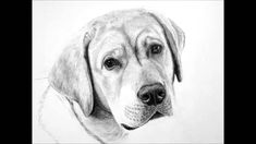 I love using graphite pencils to draw finely detailed pet portraits. Used skillfully, the monochromatic black/grey/white tones give very elegant and classy r.