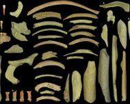 """Segni inequivocabili della pratica del cannibalismo sono stati scoperti sui fossili di Neanderthal vissuti oltre 40.000 anni fa nel sito belga di Goyet. La scoperta dimostra che questi nostri antichi """"cugini"""" avevano una grande variabilità di comportamenti nei confronti dei defunti, altri gruppi geograficamente vicini erano soliti seppellirli"""