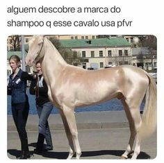 a marca do shampoo é thunaithoratioflay