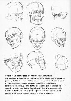 le-parti-ossee-della-testa