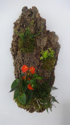 Jardim vertical em cortiça, Cork, plantas, plants, vertical garden
