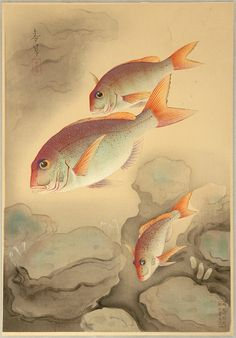 Fish species of new zealand print nz art prints design prints ohno bakufu japanese 1888 pictures of fish sea bream nd sciox Choice Image