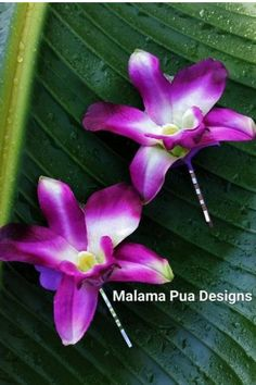 THE perfect Hawaiian Orchid. Absolutely the closest looking Silk Orchid as compared to a real Dendrobium Orchid available! The custom hair Orchids are sold individually - buy just 1 or as many as 6 - YOUR CHOICE. (Price is for 1, but 6 are available!) You can choose to have your orchids created on silver metal hair pins or premium alligator clips. Create a cascading look using 2 or more scattered in you hair. The wonderful thing is that these orchids will last forever. Silk Orchids, Dendrobium Orchids, Purple Orchids, Wedding Hair Flowers, Flowers In Hair, Silk Flowers, Flower Hair Pieces, Flower Hair Clips, Pink Lila